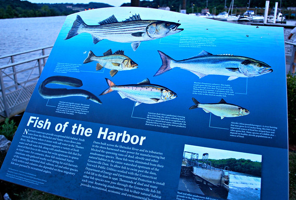 Fish of the Harbor