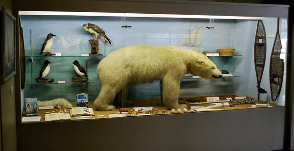 Polar Bear, birds, and other artifacts from Admiral Donald MacMillan's explorations.