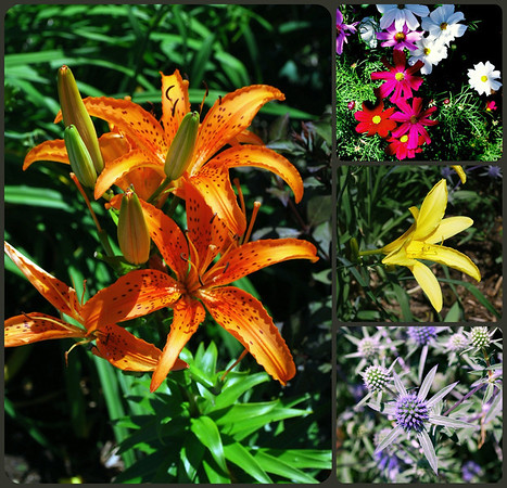 Collage from the Bridge of Flowers
