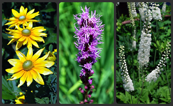 Flower collage from Bridge of Flowers